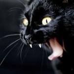 Juoda katė šnypščia