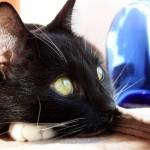 Juodos katės žvilgsnis