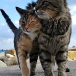 Kačių meilė