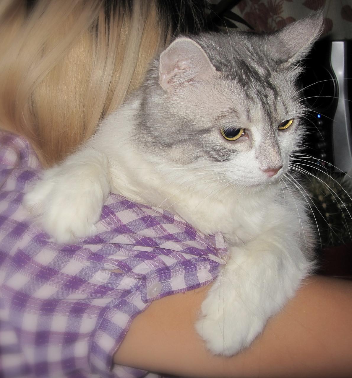 Katė ant peties