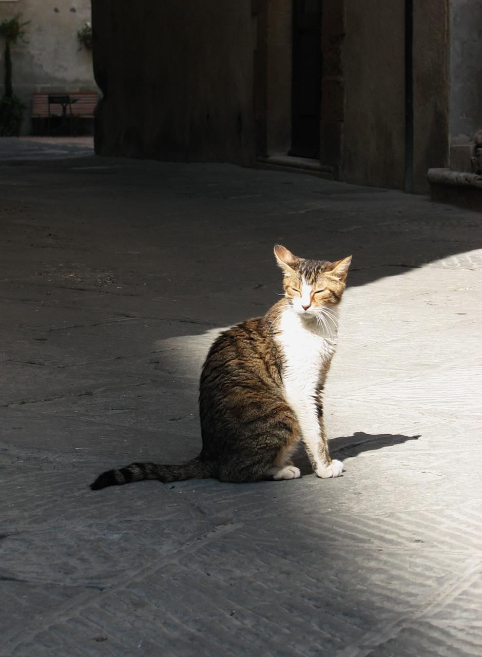 Katė saulės spinduliuose