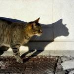 Katės šešėlis