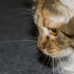 Katės žvilgsnis