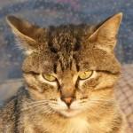 Naminis katinas
