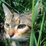 Spurga-katyte-tigryte
