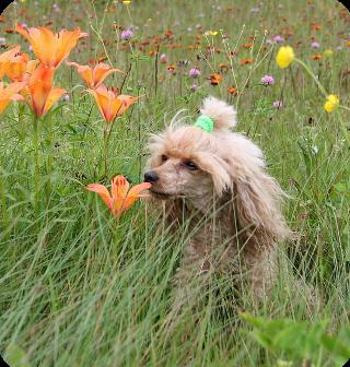 Kokie augalai nuodingi katems ir sunims