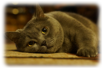 Britu trumpaplauke kate