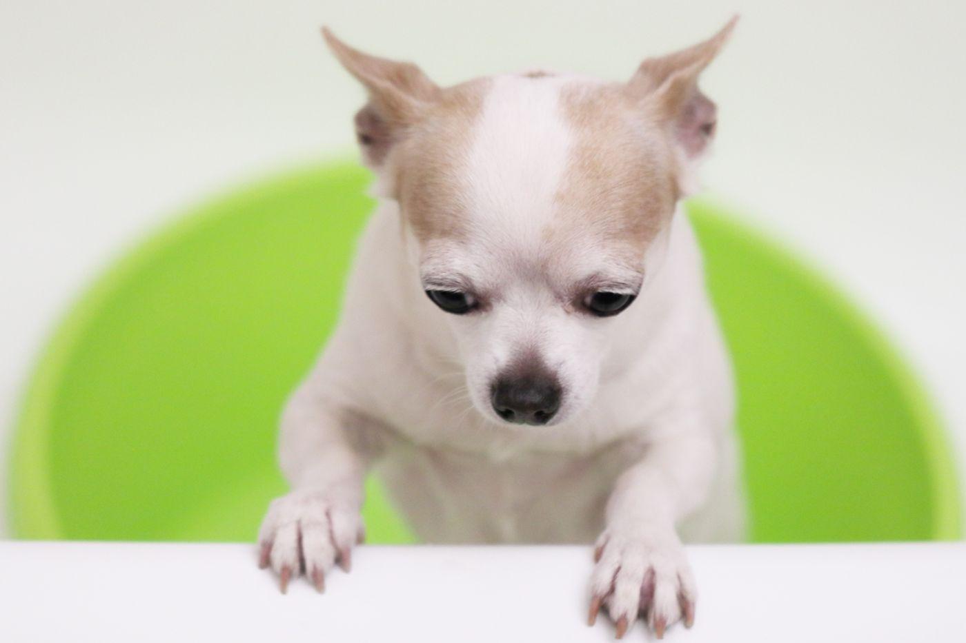 Kaip pripratinti šunį plauti letenas po pasivaikščiojimo? (1)